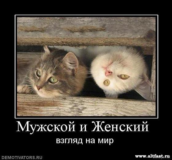 1285346326_berloga.net_1716023754.jpg